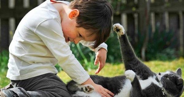 kanak-kanak-bermain-bersama-kucing