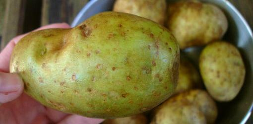are-green-potatoes-poisonous-1