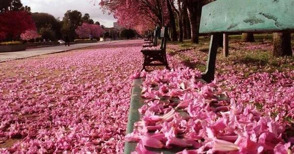 musim-bunga