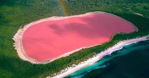 tasik-pink